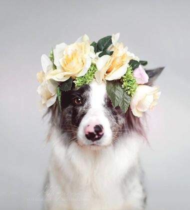 宠物专用印花三角巾