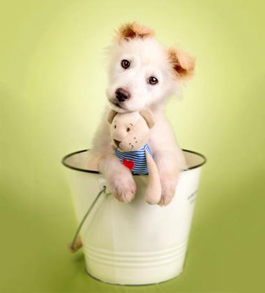 Amycarol 狗狗玩具